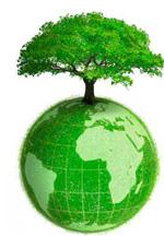 albero terra